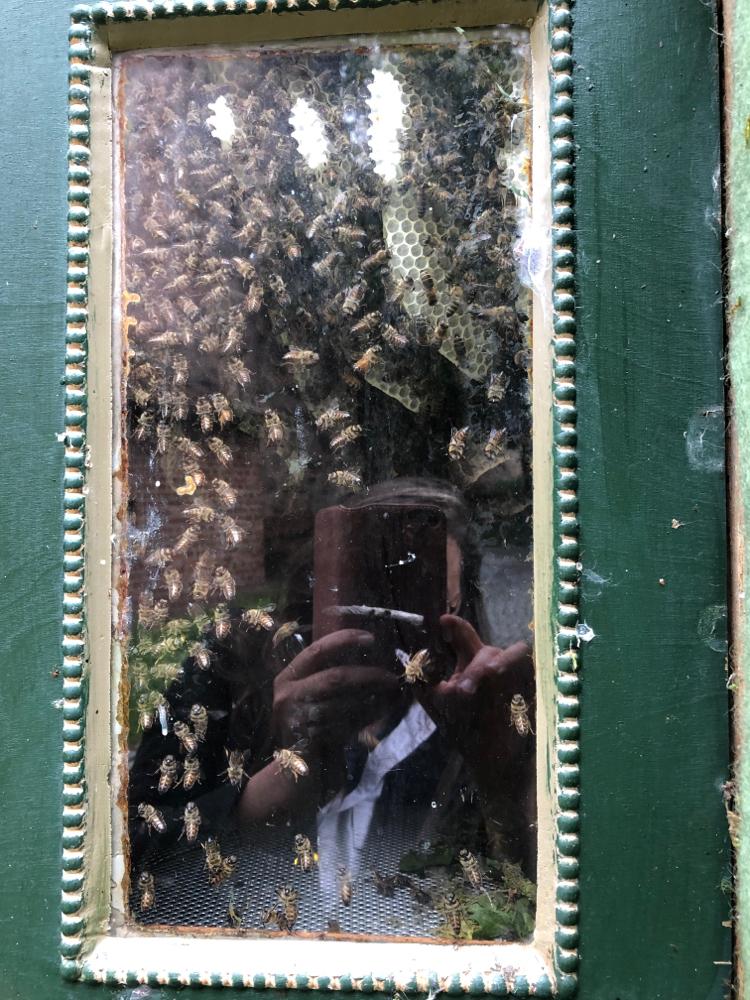 Durch des Fenster der Figutenbeute