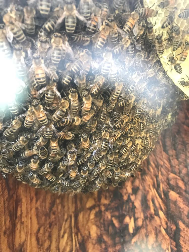 Im Bauch der Bienen Banane