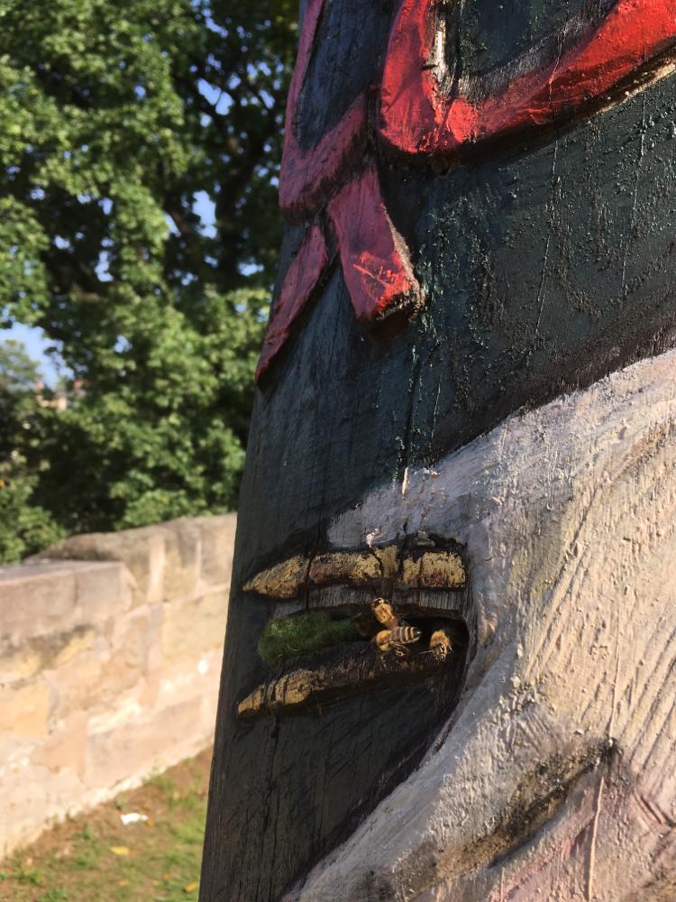 Zeidler-Bienen am Start