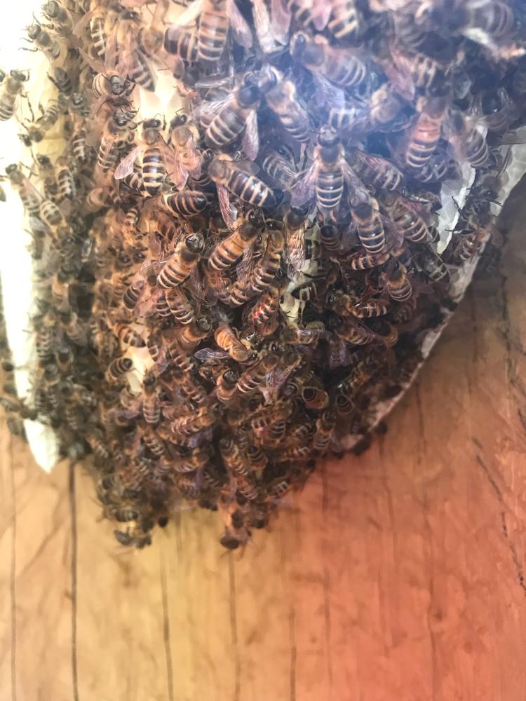 Kokon für Bienen von Innen