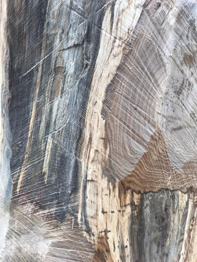 Detail Eichenstammholz