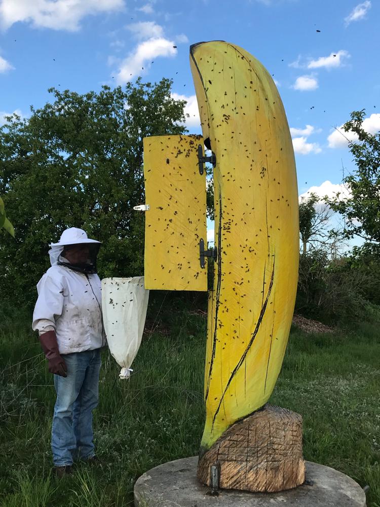 Ein Schwarm für die Banane