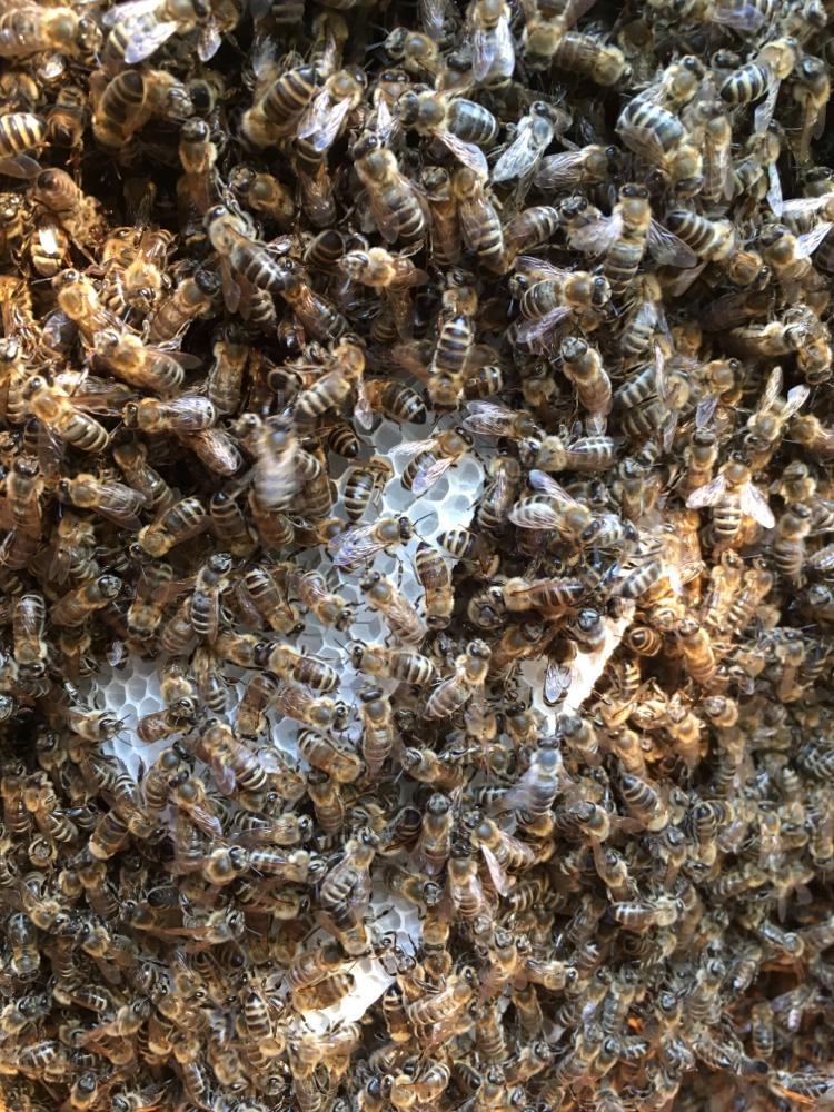 Bienen im Bauch von Marilyn Monroe II