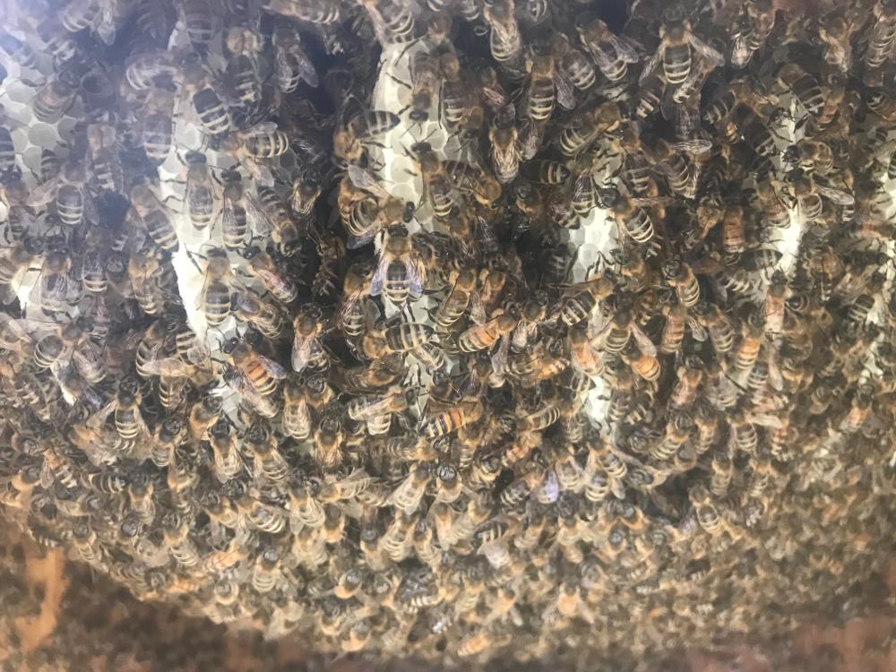 Bienen im Bauch des Buddha