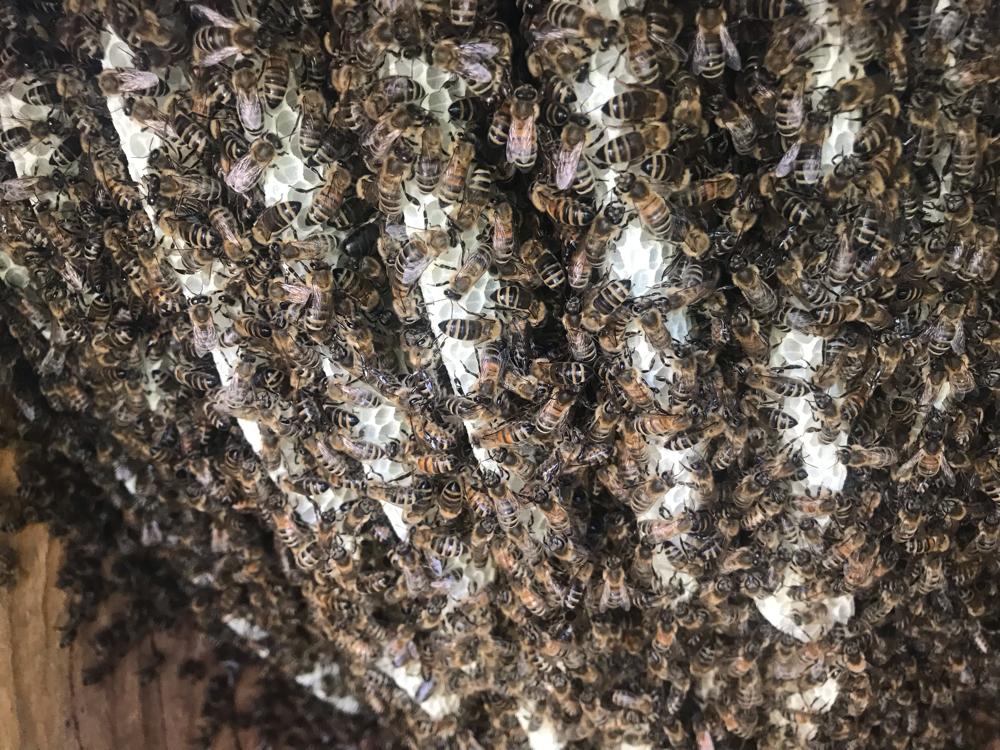 Buddha Bienen