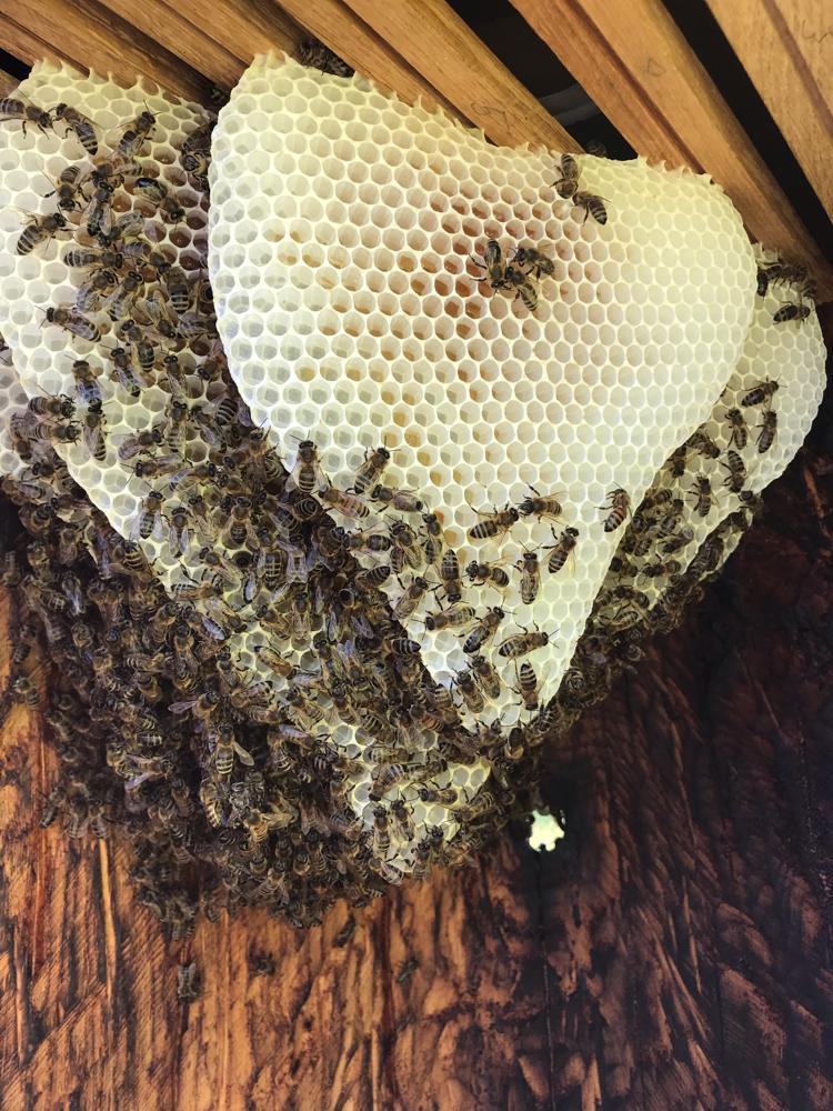 Bienen in der Banane