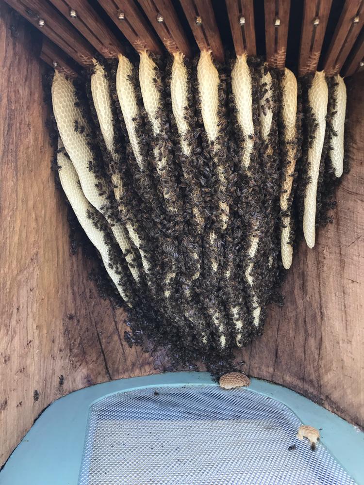 Bienenvolk in der Figurenbeute Buddha