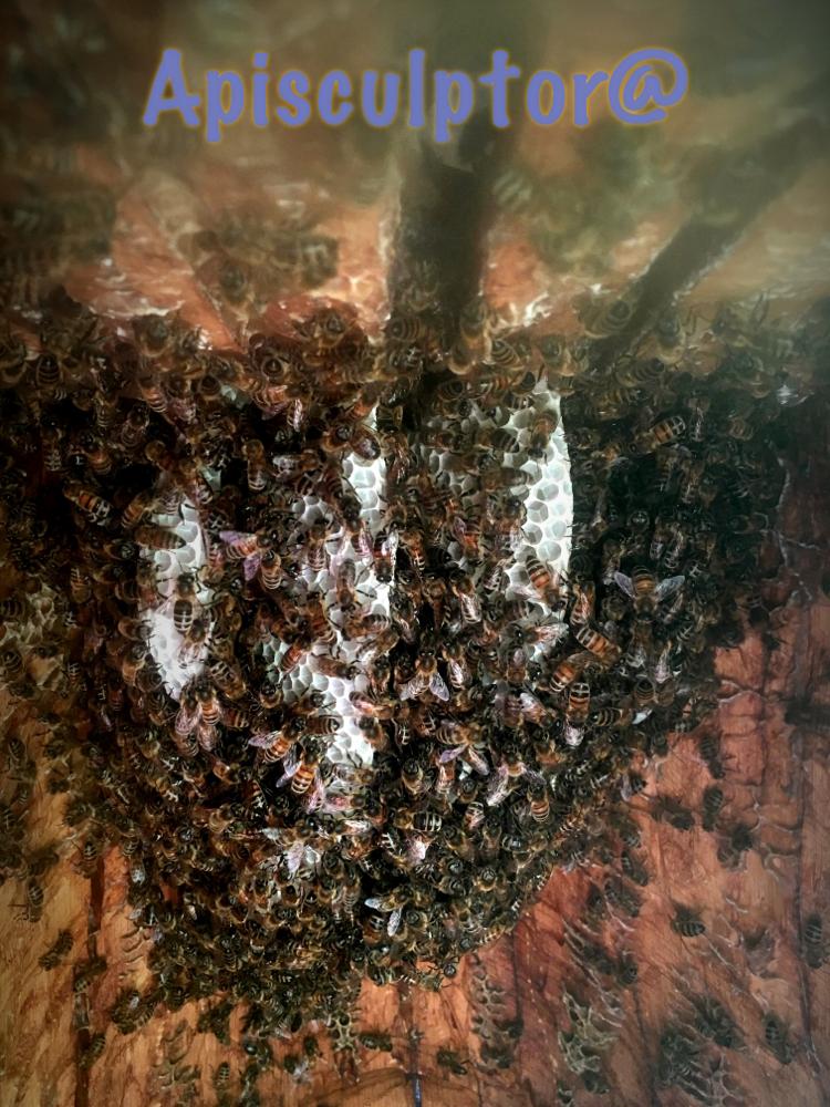 Die Zeidler - Bienen, oder im Bauch des Zeidelschützen