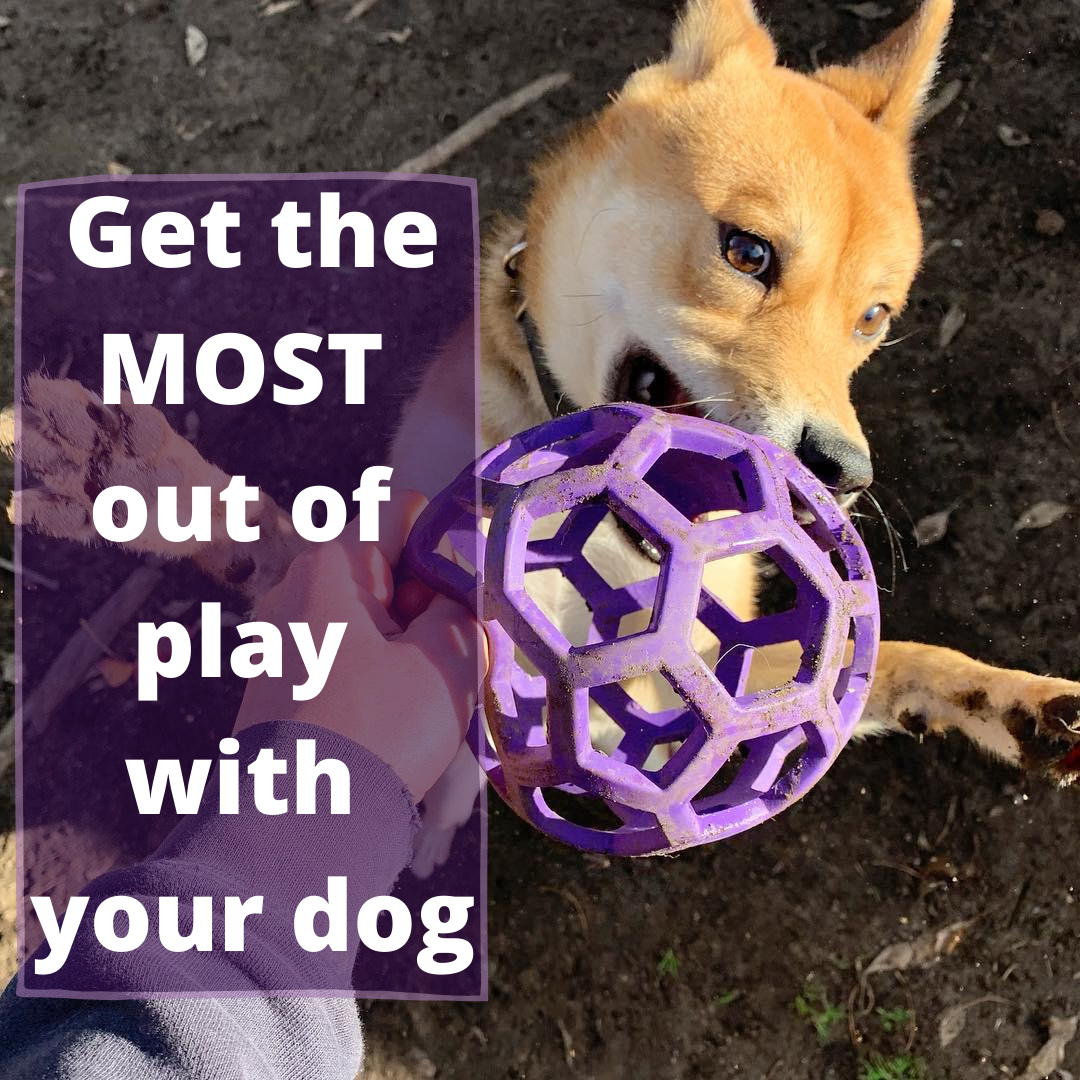 How to get the most out of play with your dog
