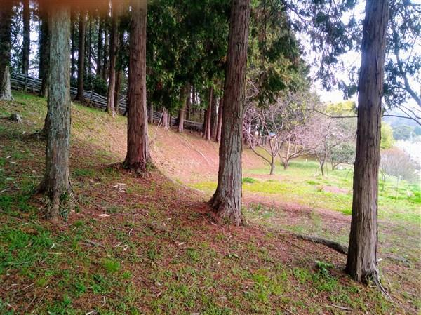 日和舎の南側に広がる土地。きれいに手入れされてます。