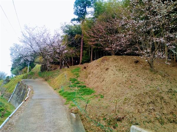 桜が迎えてくれるこの坂を登ると日和舎です。