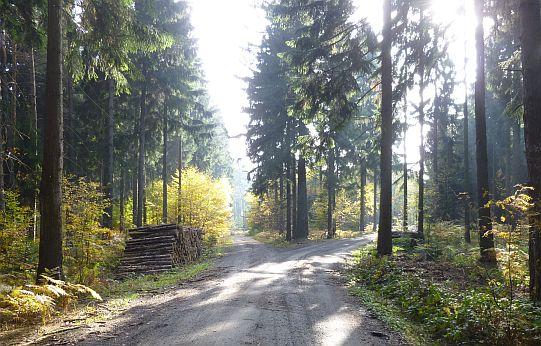 Walderlebnisse am Lampertsstein - Wandertipp für Familien im Elbsandsteingebirge