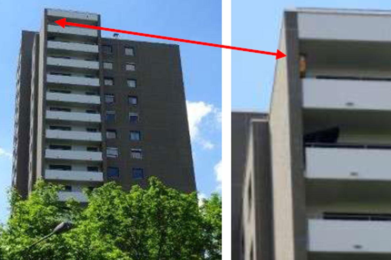 Mauersegler bewohnen auch Hochhäuser. In diesem Fall auf den Terrassen einer Penthouse-Wohnung. Foto: Ingolf Grabow