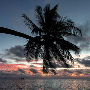 Sailing Boat, Palm Tree at Sunset, Bora Bora, French Polynesia, South Pacific Ocean