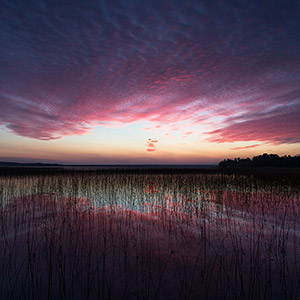 Purple Colors at sunrise at a lake in Gaevle, Sweden, Scandinavia