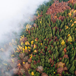 Blackforest with Autumn Tree Colors and Fog, DJI Phantom 3, Drone, Germany
