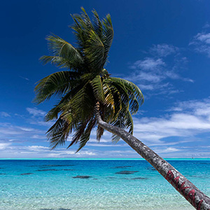 Palm Tree and ts Shadow in the Crystal Clear Water, Bora Bora, French Polynesia, South Pacific Ocean