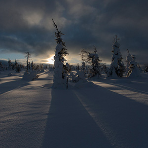 Long Shadows, trees covered with snow in Finland, Lapland, Riisitunturin National Park in opposing light, Posio