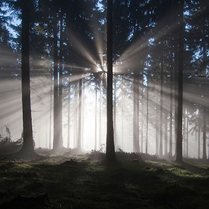 Breakthrough - rays of light shining through fog and trees in the Taunus Mountains, Hessen, Germany