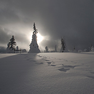 Steps in the snow -trees covered with snow in Finland, Lapland, Riisitunturin National Park opposing Light, Posio