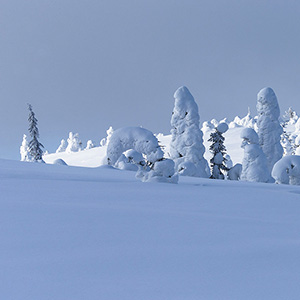Symphony - trees covered with snow in Finland, Lapland, Riisitunturin National Park, Posio