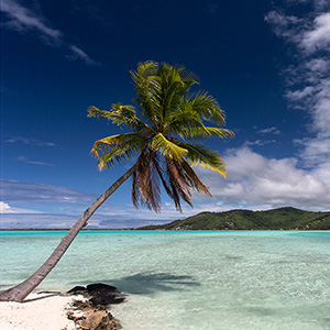 View to Bora Bora Island, Palm Tree and Clear Water, French Polynesia, South Pacific Ocean