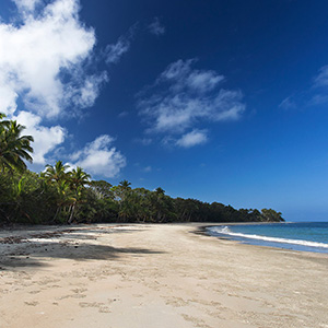 Tropical Rainforest and White Beach at Cape Tribulation, Cairns, Queensland, Australia