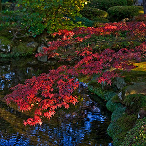 Japanese Garden, Kenrokuen Garden in Autumn Colors, Kanazawa, Japan, Asia