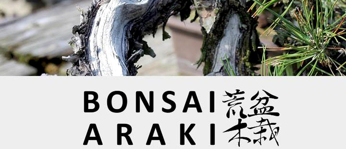 Journée d'initiation bonsaï