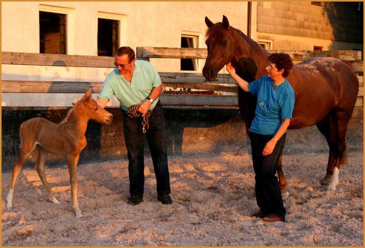 Wir haben uns sehr über Velvets erstes Fohlen gefreut und sie war eine tolle Mama.