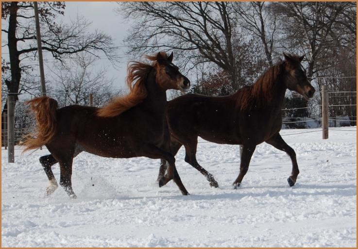 Hier tummeln sich Ryanna und Velvet im Schnee.
