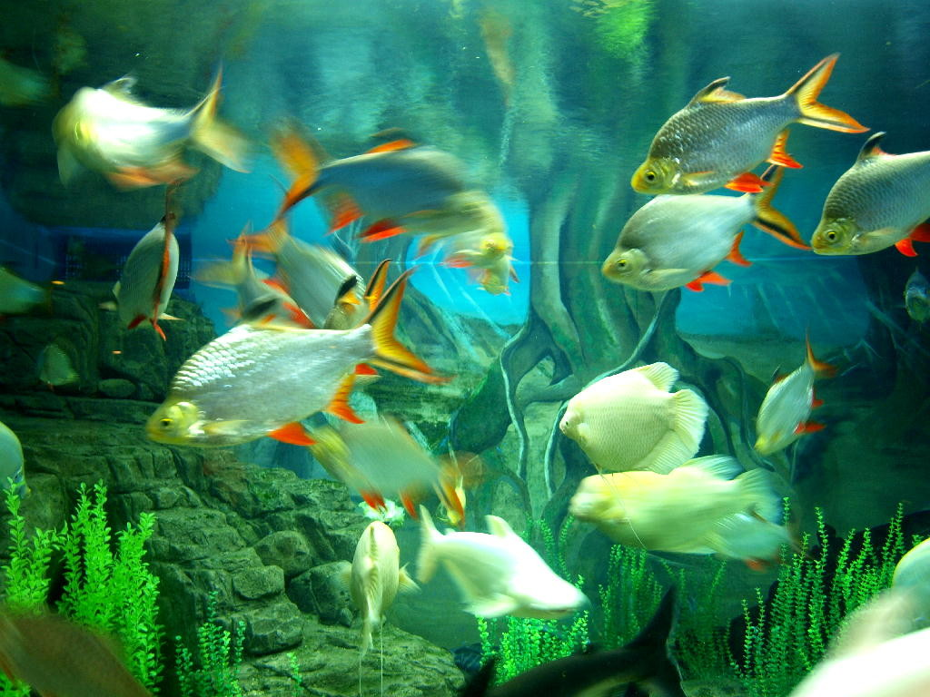 pesce bianco giallo