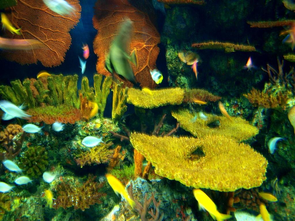 spugne e coralli