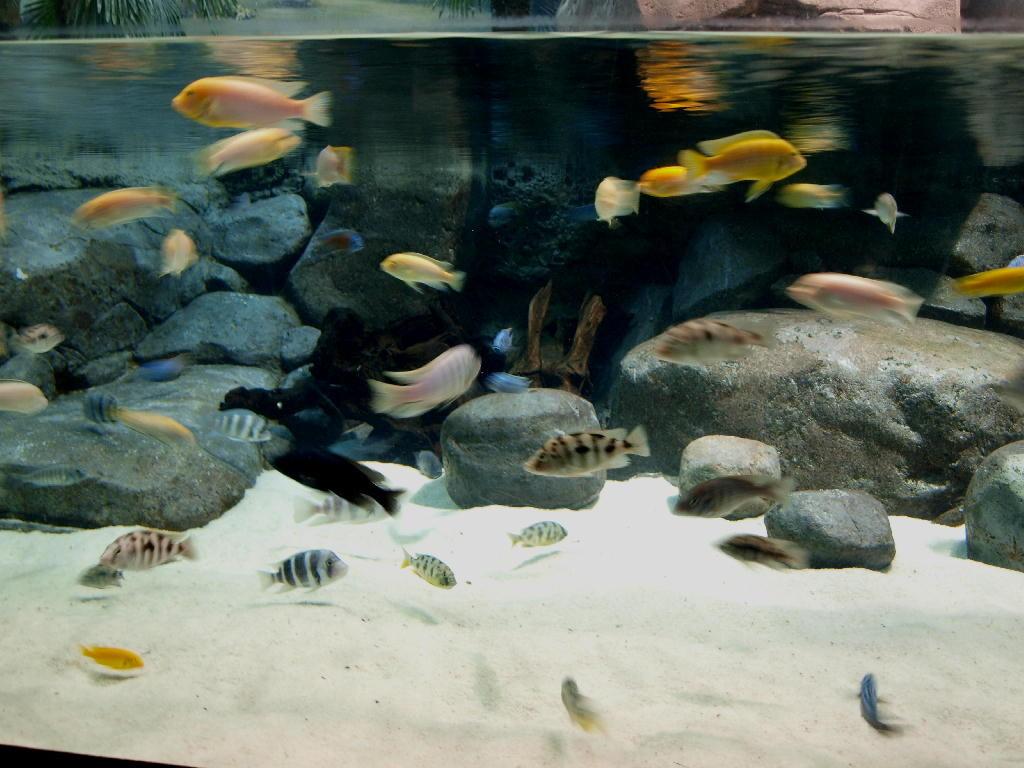 pesci in colonia