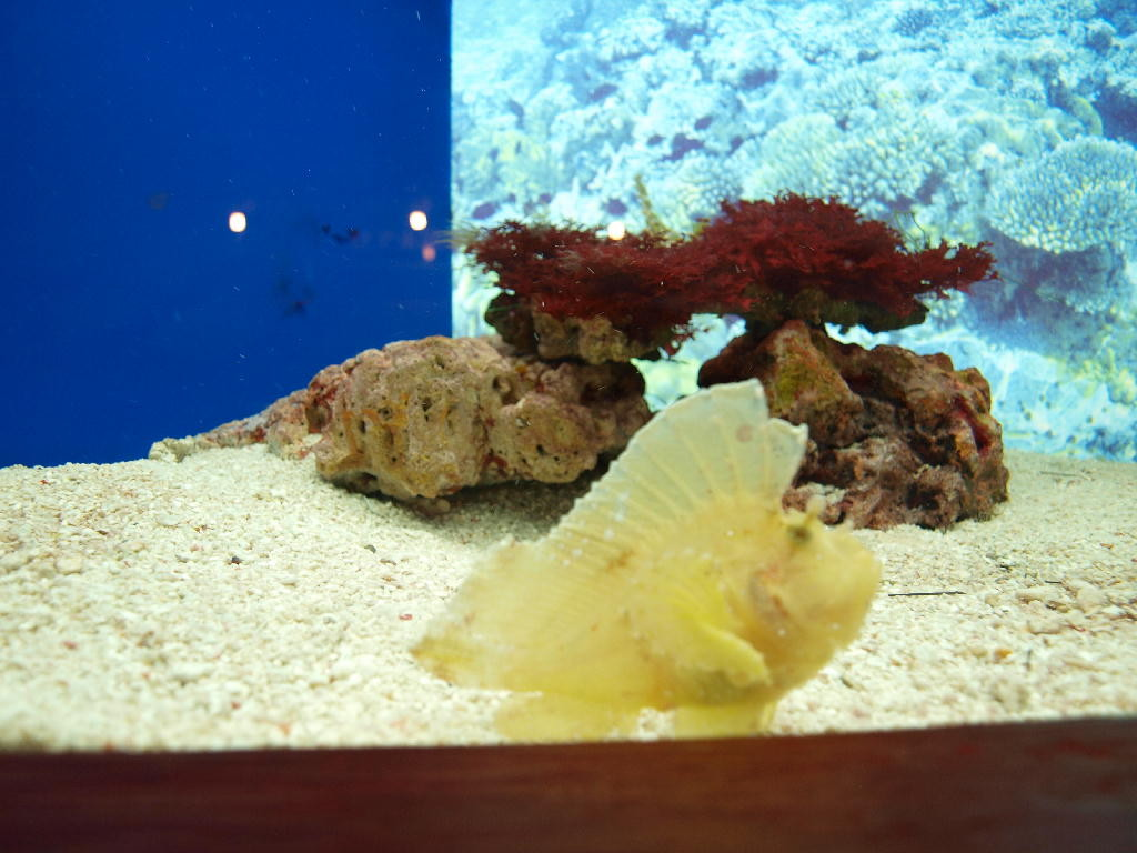 pesce giallo quadro