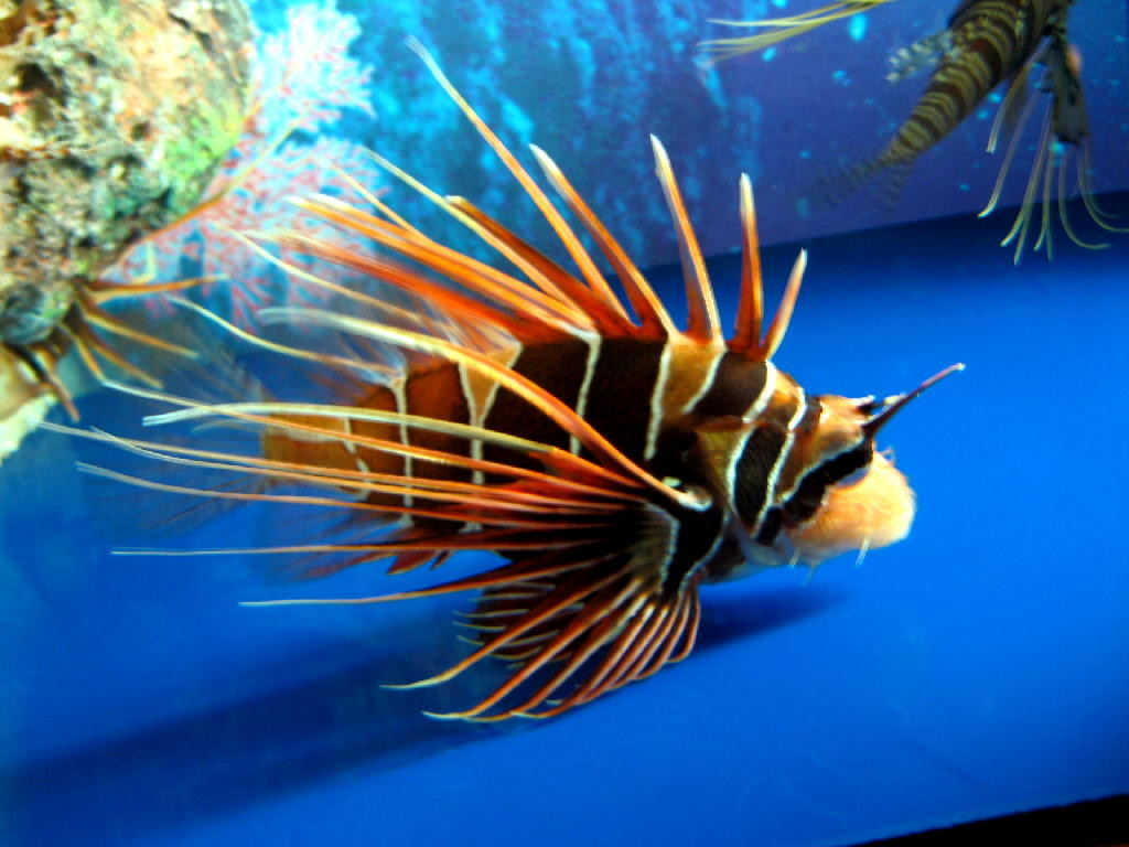 pesce spina