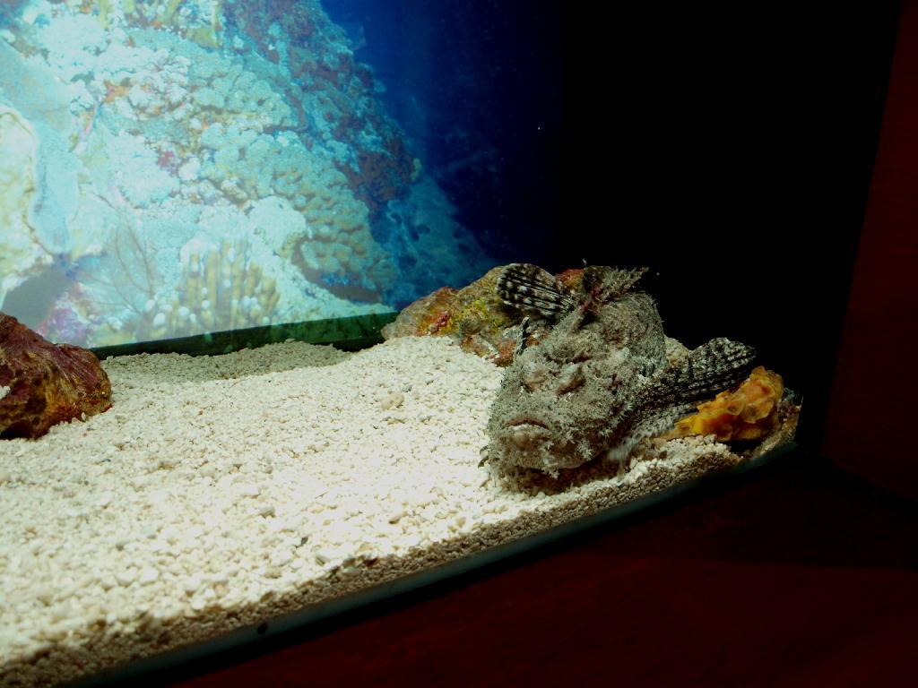 pesce rospone