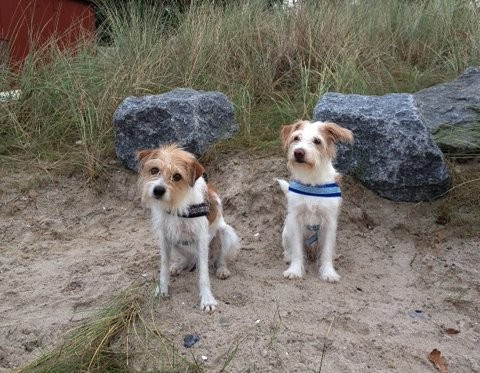 Flax Tochter Alia vom Linderoth (links) und ihre Bluna im Herbst 2014