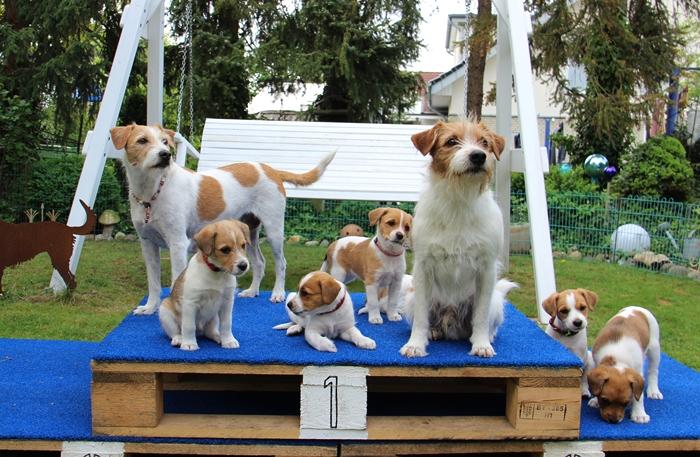 Familie - Brezel & Han mit ihren Kindern