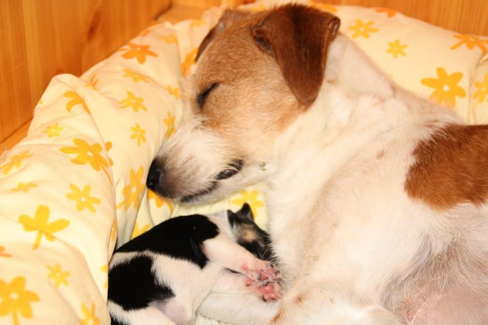 Bardur kuschelt bei Mama