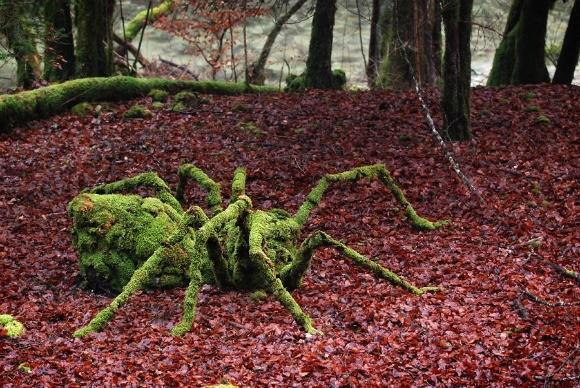 Gambastyle araignée en mousse sur feuille morte