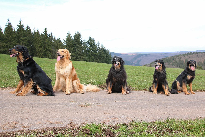 Aquila Wolf von Remaclus, Booker-Bleik vom Silberdistelwald, Feah vom Rupertigau, Aydin von Isegrim & Bonnie Wolf von Remaclus