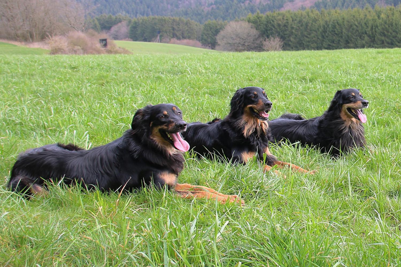 Bonnie Wolf von Remaclus, Aquila Wolf von Remaclus & Aydin von Isegrim