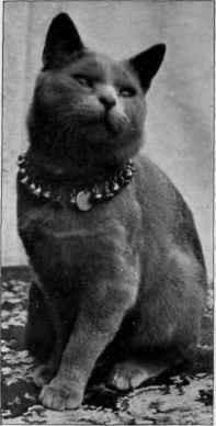 Кот Bayard (1898 г.р)