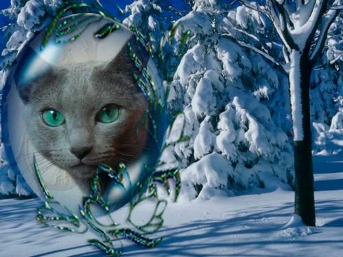 Русская голубая, купить котенка, котенок, русский голубой, кошка