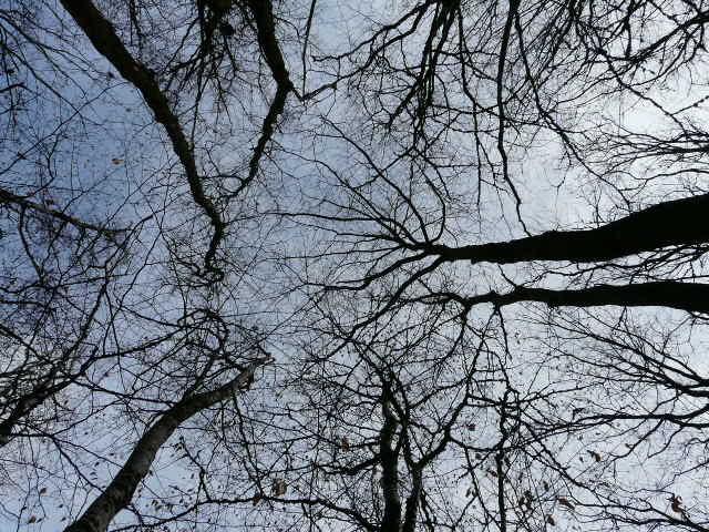 Savoir lire une canopée pour favoriser l'arbre d'avenir en enlevant ceux qui le gène.