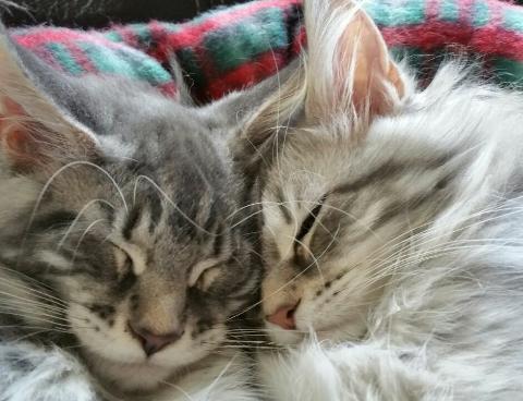 Donna en haar broer
