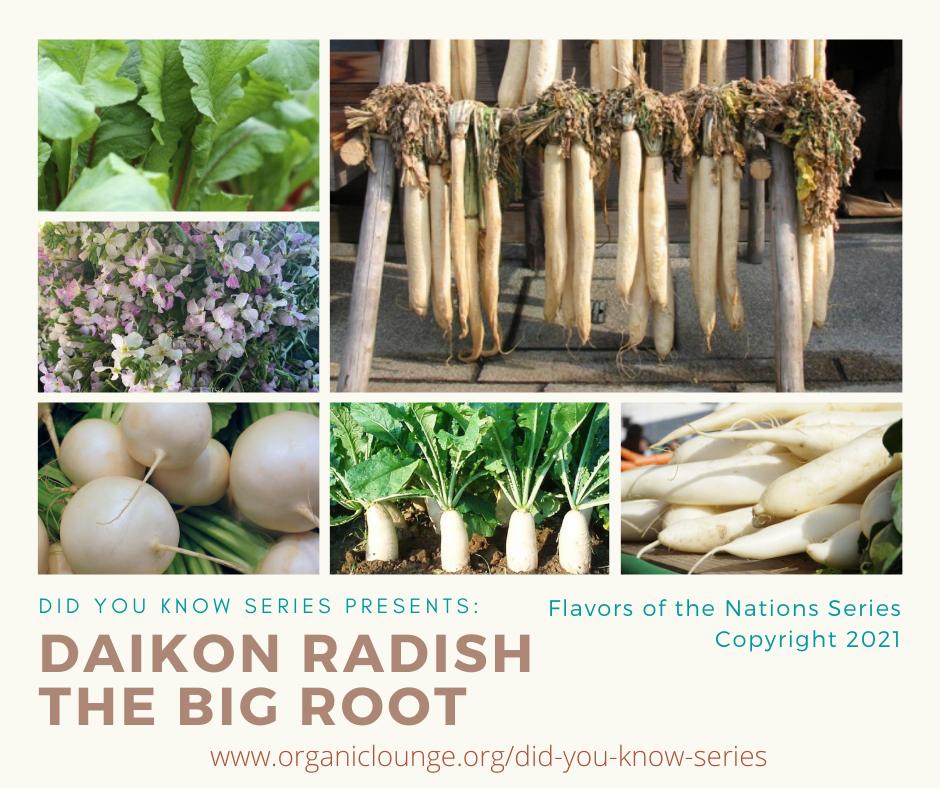 Daikon Radish, The Big Root