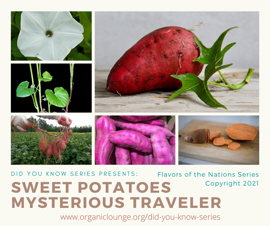 Sweet Potatoes, Mysterious Traveler