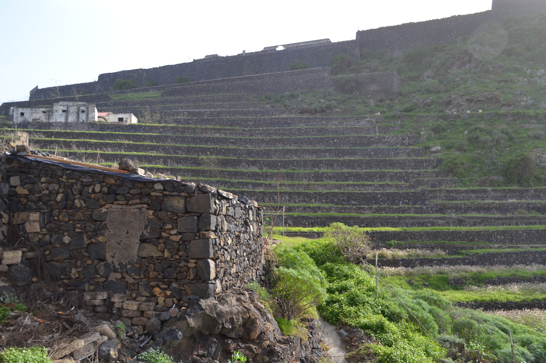 Terrace plantations, ancient way to grow food in Tenerife